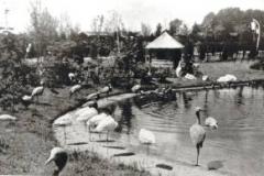 vijver-1952